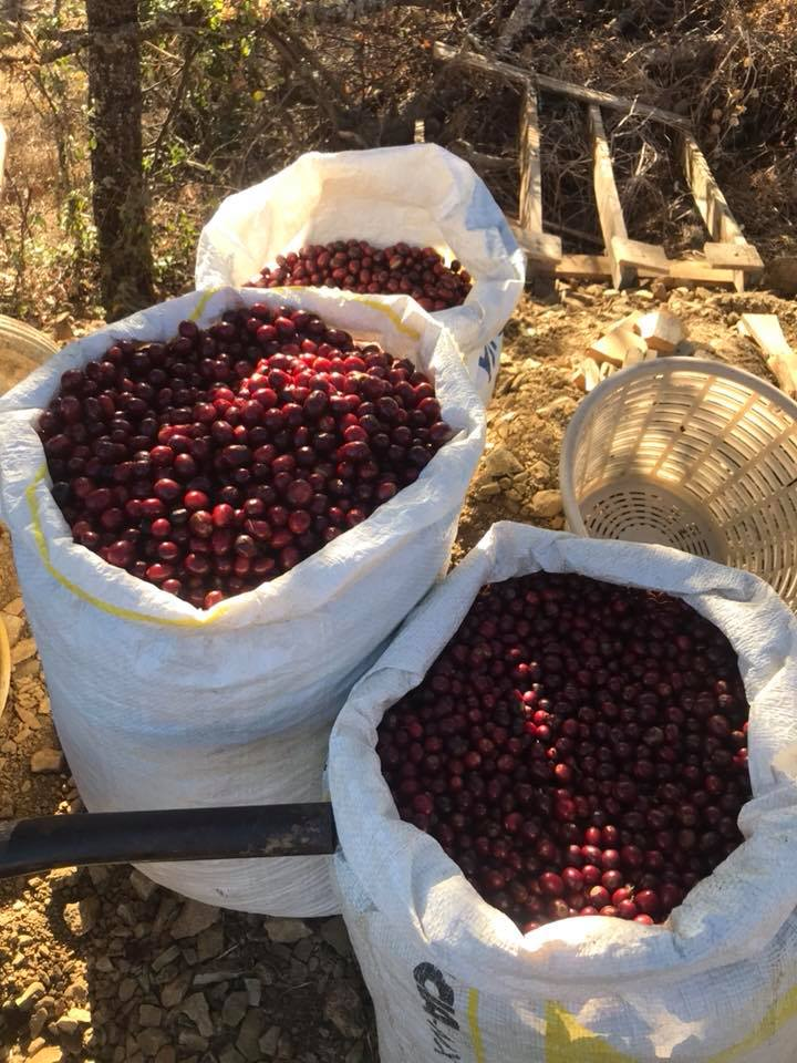 Our Partnership With Duluth Coffee Company